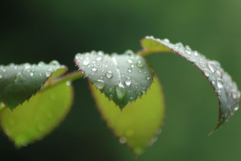 10+ Raindrops HD Wallpapers