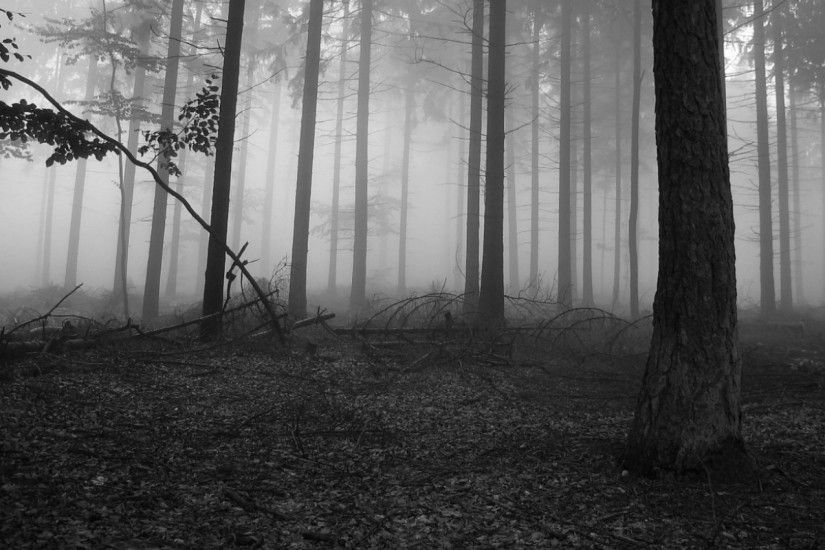 wallpaper.wiki-Black-and-White-Forest-Wallpaper-HD-