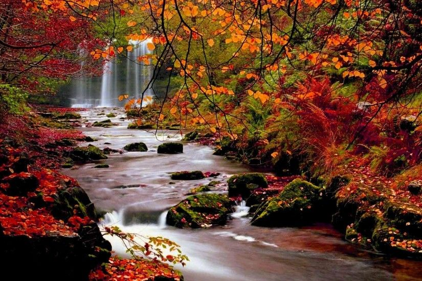 Fall Trees | Autumn Trees Nature Landscape Leaf Leaves Desktop Background  Images…