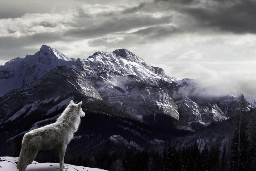 wolf wallpaper 1920x1080 for ipad