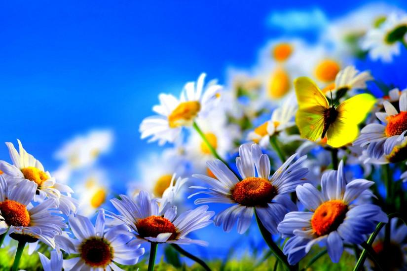 download free spring flowers wallpaper 2560x1600