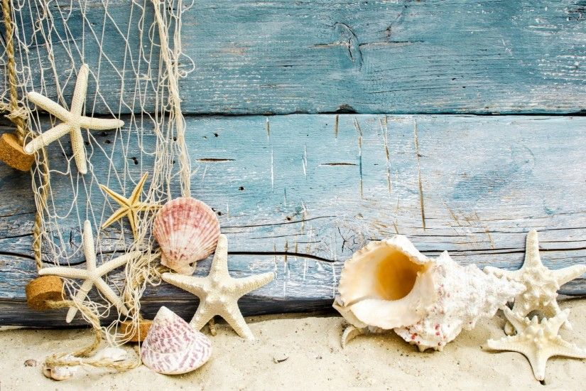 seashells starfishes beach sand marine wood shells beach sand