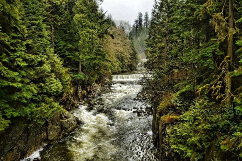 widescreen, canada, cleveland, dam, north, columbia, british, north,  vancouver, forest, trees, nature, view, forest, british, canada, vancouver,  ...