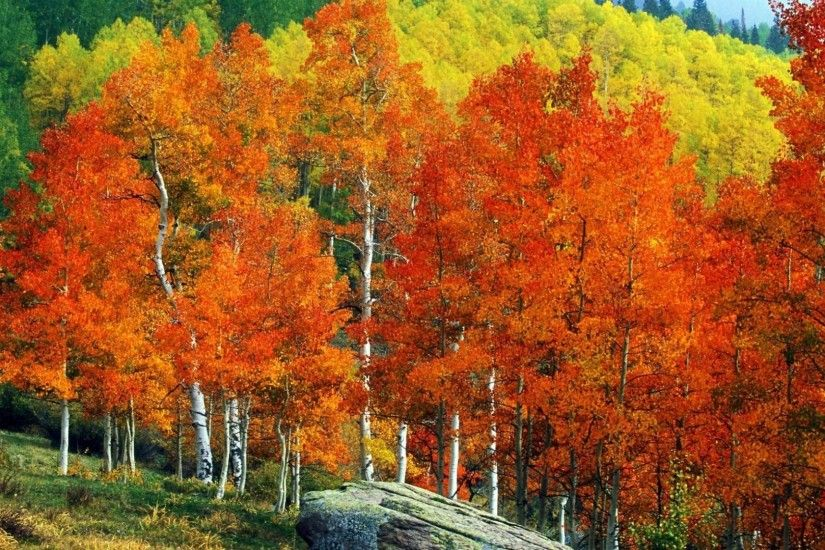 1920x1080 Other - Fall Mountains Trees Aspens Autumn Street Landscape Owl  Pass Colorado Colors Creek Desktop