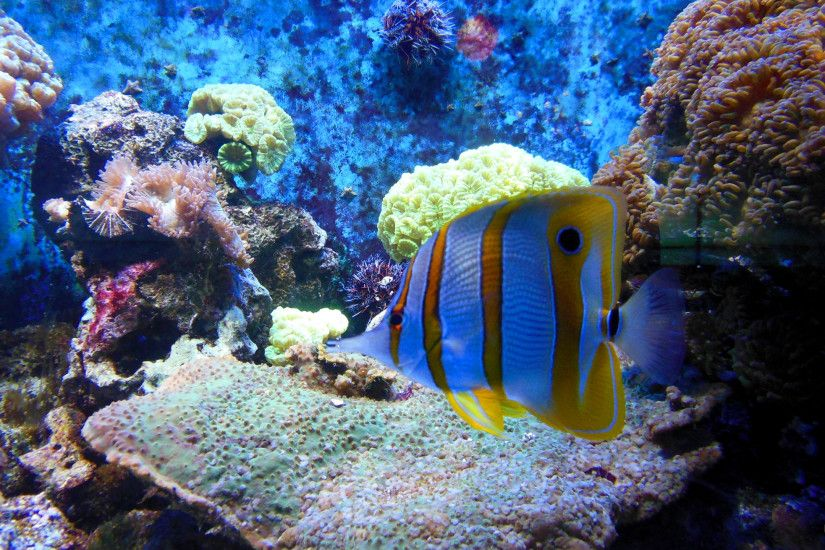 Blue ocean waves · Tropical fish and anemones