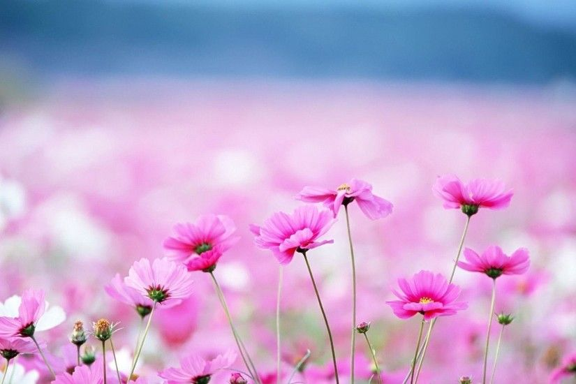 Floral Desktop Background Â« Desktop Background Wallpapers HD