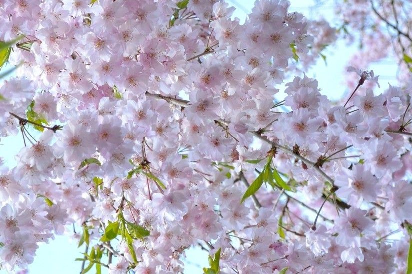 2560x1440 Wallpaper cherry, blossom, spring, branches, mood