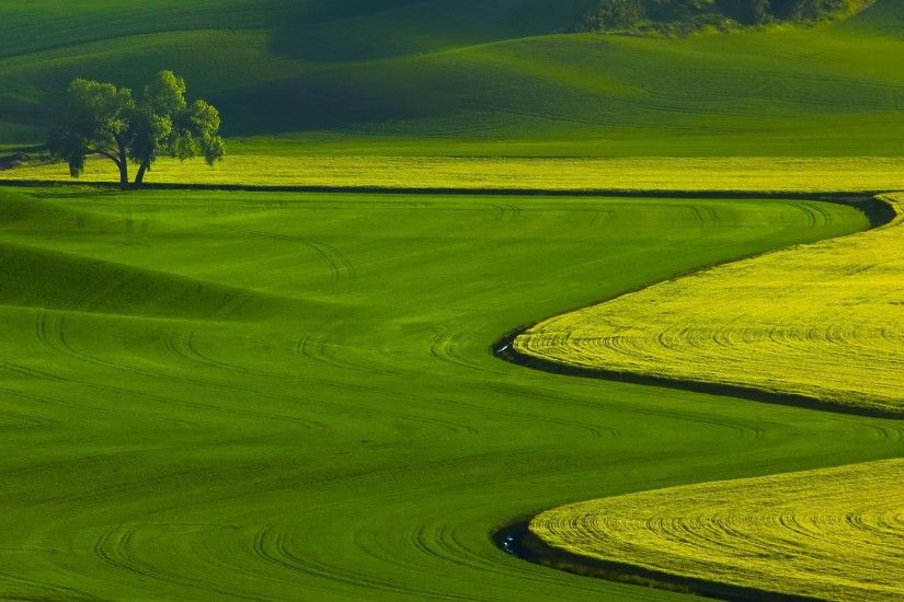 green grass field wallpaper hd wallpapers free background wallpapers  colourful widescreen 1080p display digital photos 1920×1080 Wallpaper HD