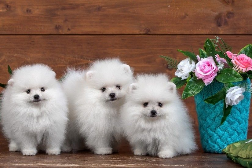 Cute dogs HD wallpapers free
