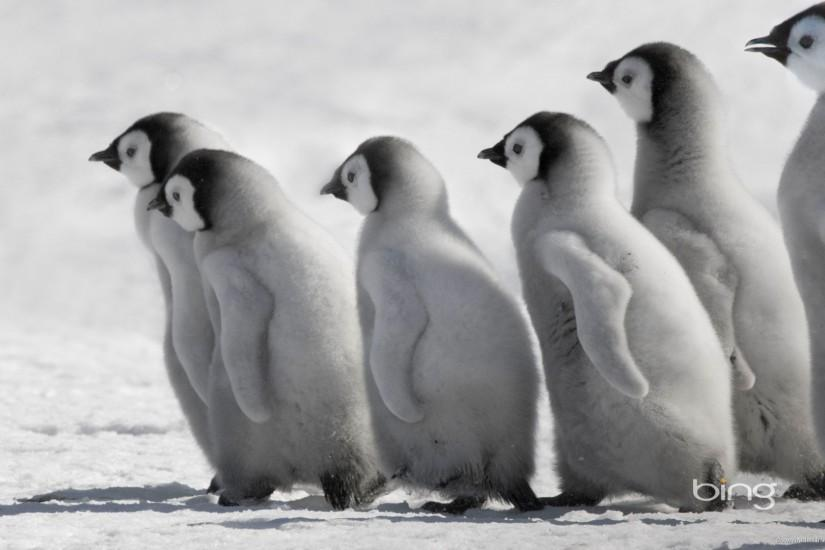 Bing Penguins picture