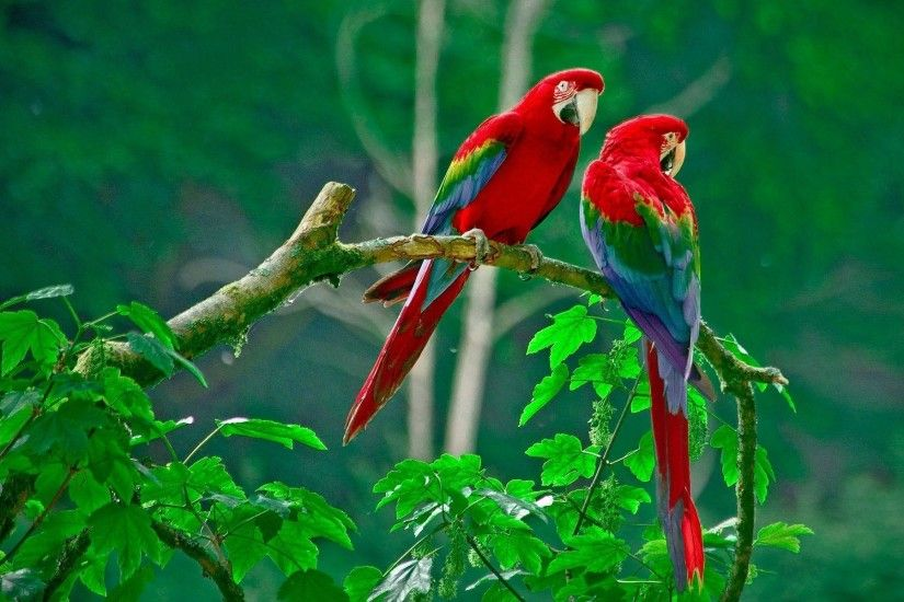 Love-Birds-Wallpapers-in-Pink-10 - Animals Planent.
