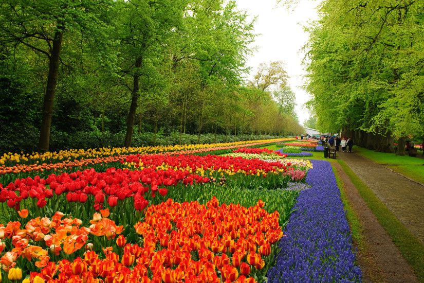 flower gardens pictures | Niederlande Keukenhof Flower Garden wallpapers