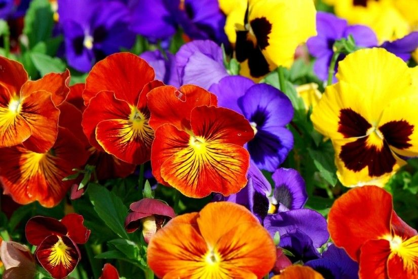 7. colorful-flower-wallpaper7-600x338
