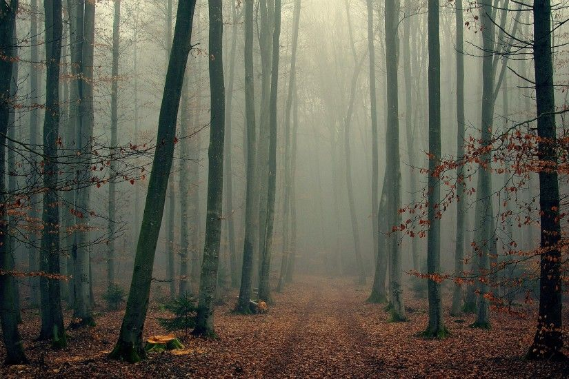 2560x1440 Wallpaper wood, trees, fog, foliage, autumn, cool