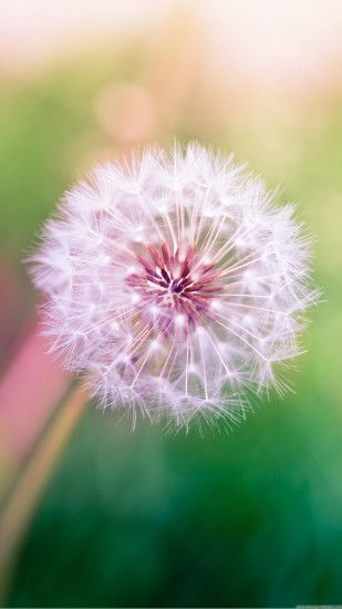 Dandelion Lock Screen 1080x1920 Samsung Galaxy Note 3 Wallpaper HD 1080x1920