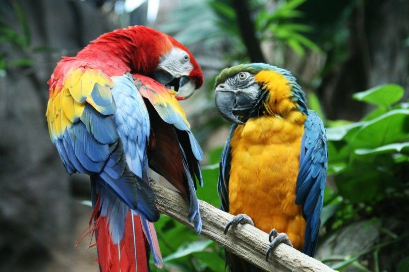 Tropical Tag - Tropical Bird Macaw Parrot Beautiful Pictures Free for HD  16:9 High