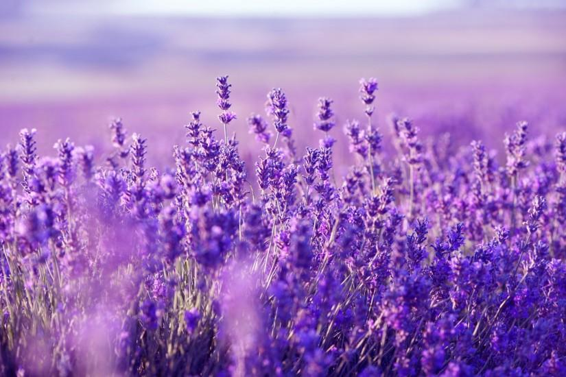 full size lavender background 2000x1330 cell phone
