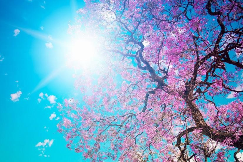 Spring Wallpapers | Best Wallpapers