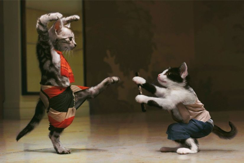 hd pics photos attractive funny cat martial arts fighting hd quality desktop  background wallpaper