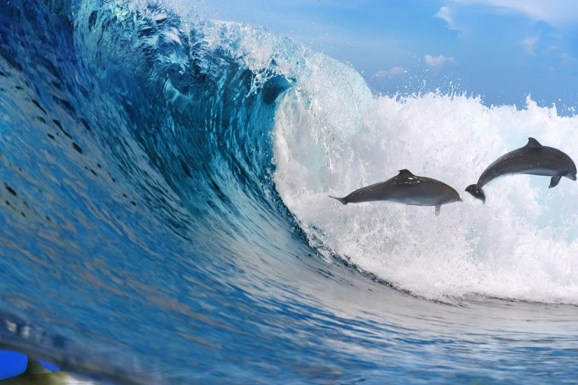 2560x1440 Wallpaper dolphins, ocean, wave, freedom