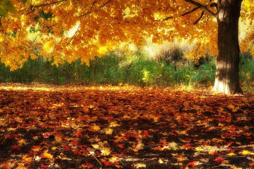 HD Fall Scenery Wallpapers #8194