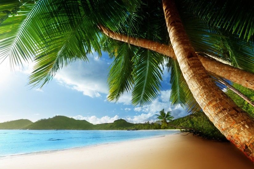 Tropical Palm Trees Beach Ocean Desktop