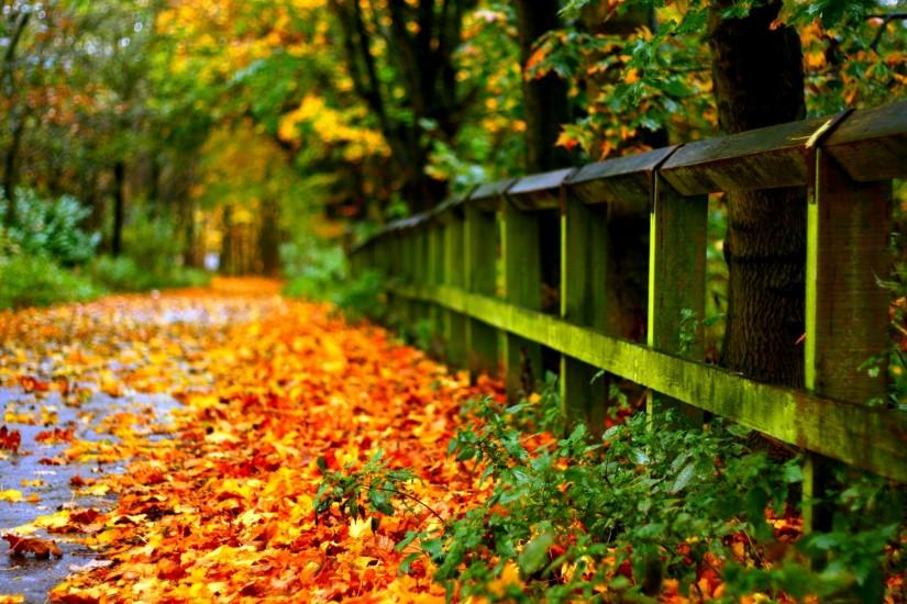 Autumn Leaves on Road Wallpaper