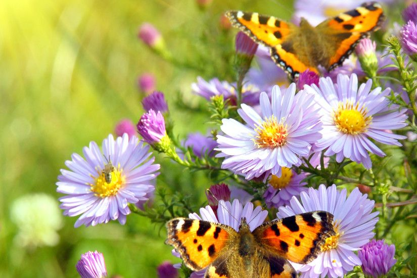 Spring Flowers And Butterflies Cool Wallpapers. Rose Flower Wallpaper Wide