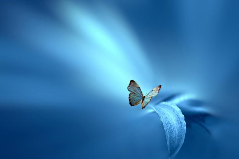 new butterfly background 1920x1200 for windows
