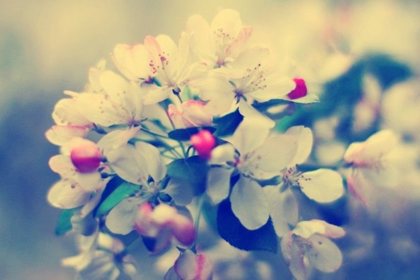 Preview wallpaper blossom, branch, flower, glare 1920x1080