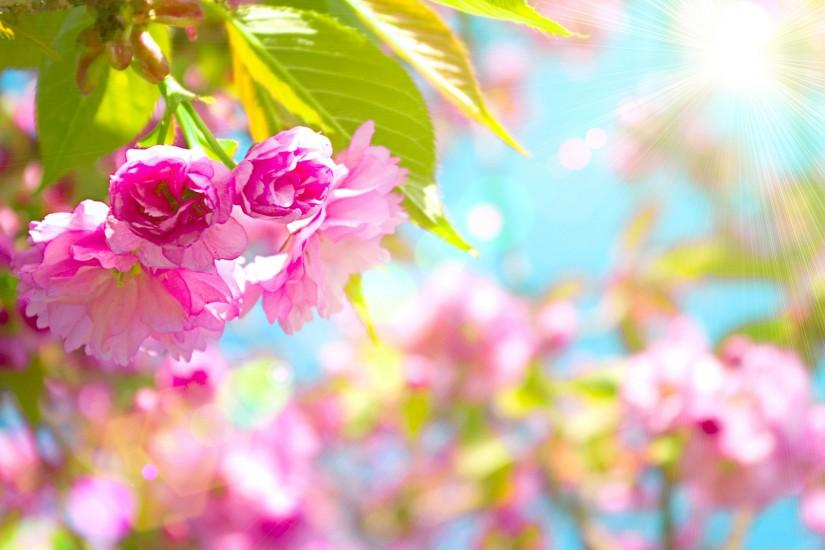 top spring backgrounds 1920x1289