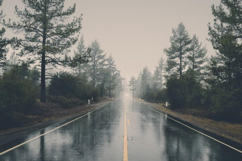 Rainy road through forest
