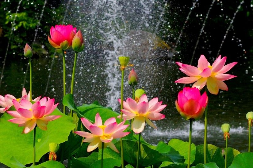 Nature flower garden wild pink hd wallpaper wallpaper | 2560x1600 .