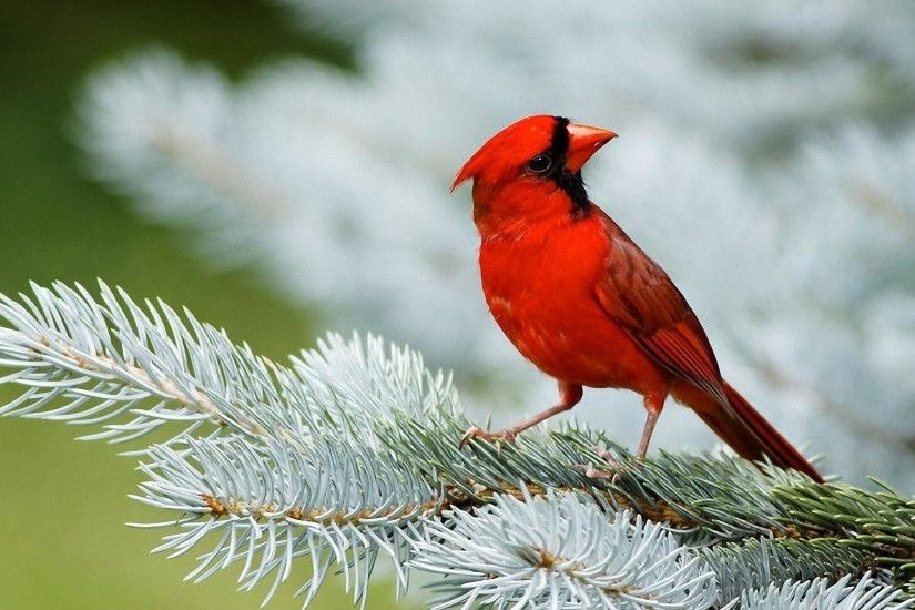 Birds Wallpaper for Free – Superb HQ Definition Wallpapers for mobile and  desktop