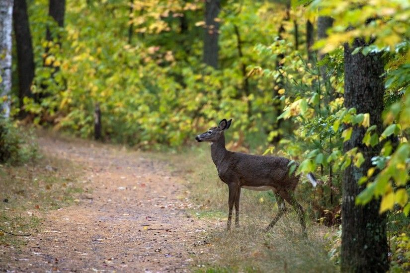 Trail Tag - Deer Trail Path Nature Landscapes Wildlife Woods Trees Leaves  Forest Animal Photos Amazing