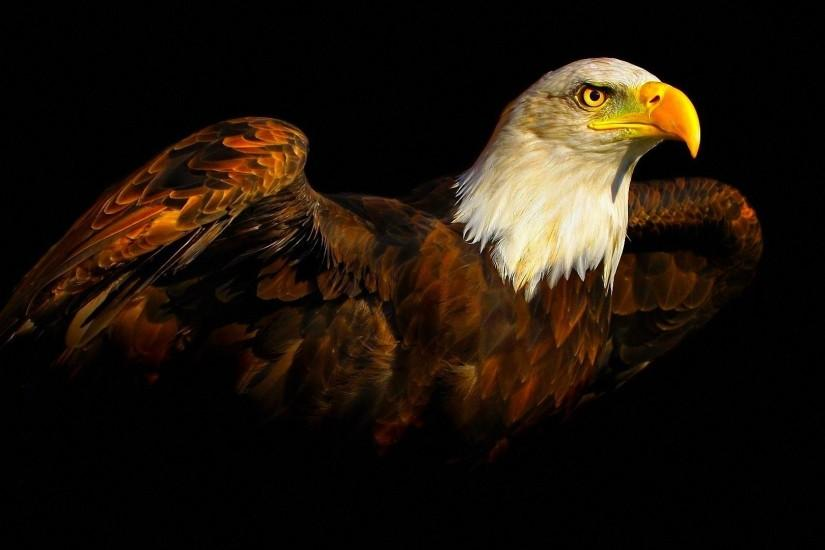 eagle download wallpaper