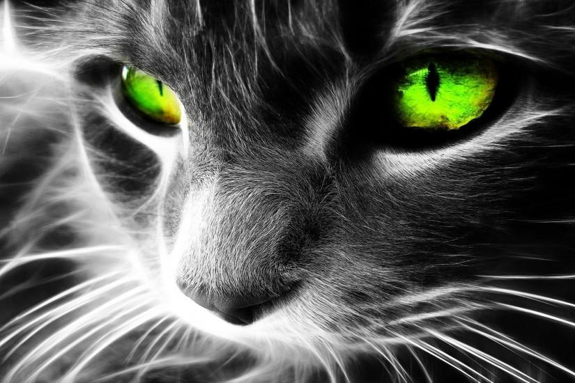 most popular cat background 1920x1200