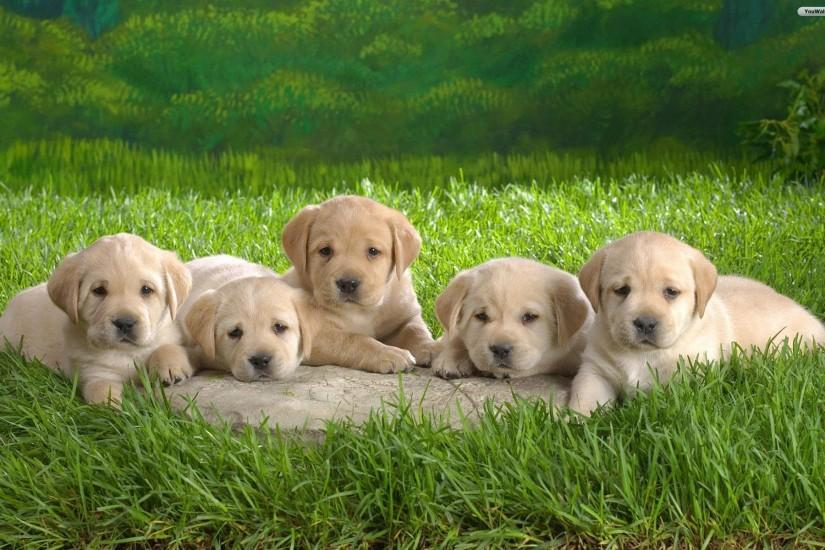 large puppies wallpaper 1920x1200