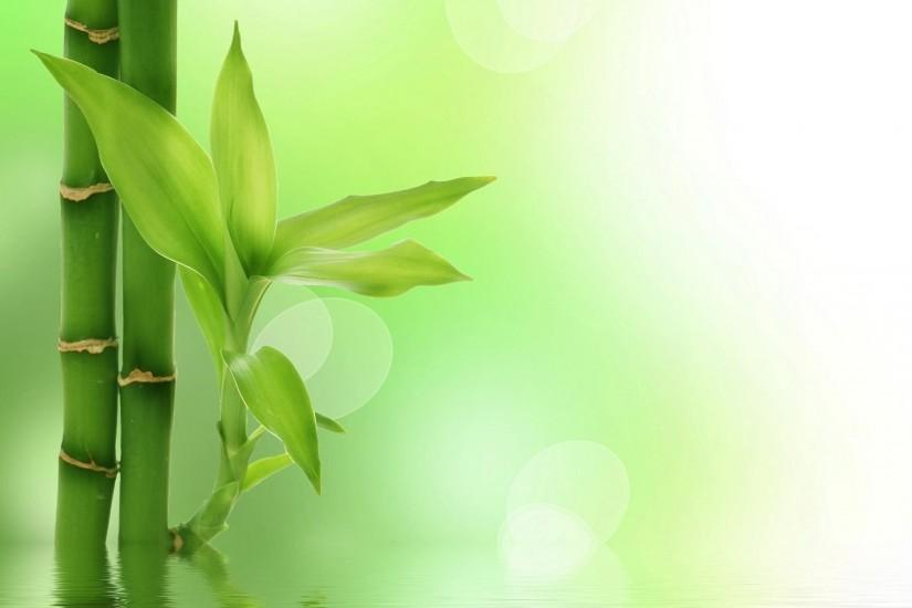 download free bamboo background 1920x1200 hd for mobile
