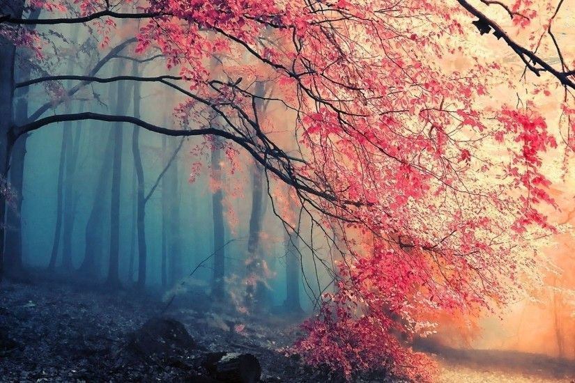 ... Beautiful Forest HD Background Wallpapers 5025 HD Wallpapers Site free  powerpoint background