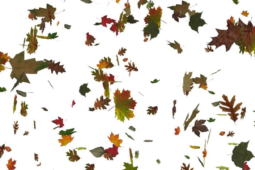 Subscription Library Animated falling leaves on white background with real  world textures on each leaf.