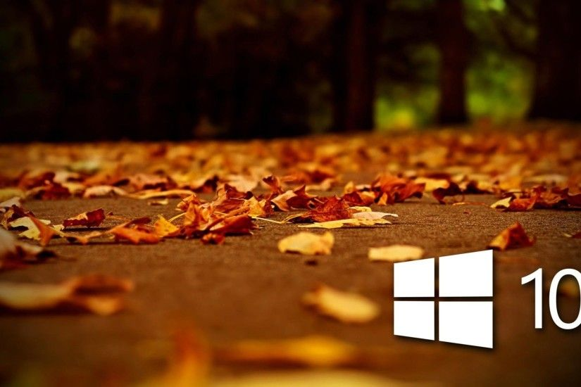 AUTUMN fall landscape nature tree forest leaf leaves windows microsoft  wallpaper | 2560x1600 | 838133 | WallpaperUP