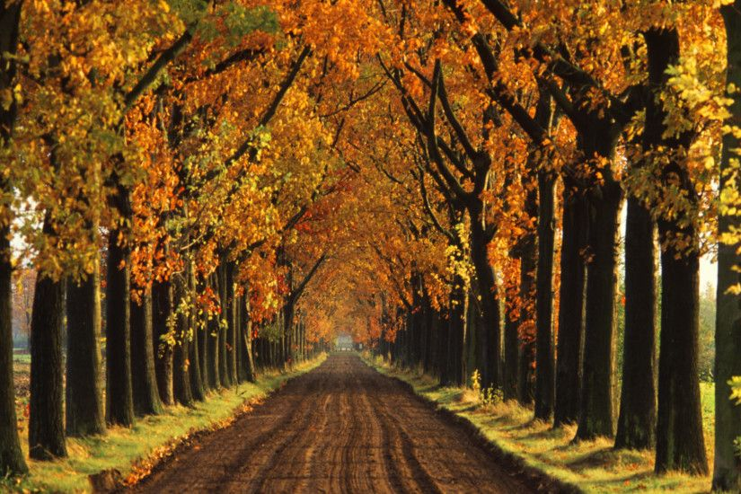Download Background - Tree-Lined Lane in Autumn, Holland - Free Cool  Backgrounds and Wallpapers for your Desktop Or Laptop.