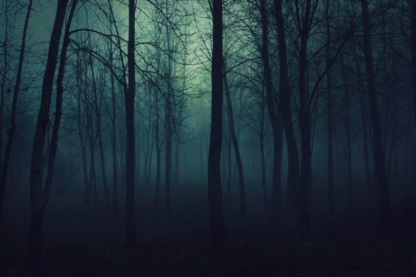 Creepy trees dark forests mist wallpaper | 1920x1080 | 193670 .