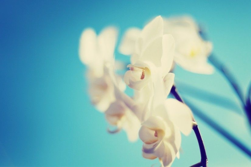 wallpapers orchid. Â«Â«