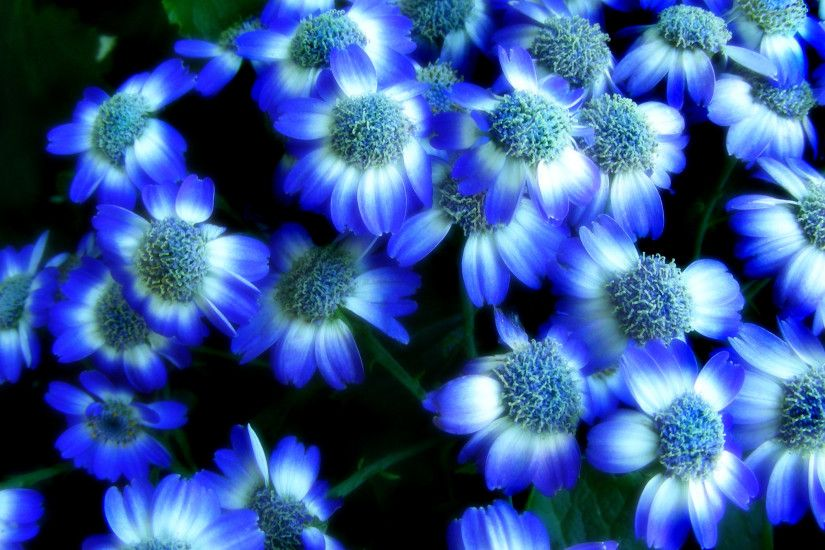 Blue And White Flowers Tumblr