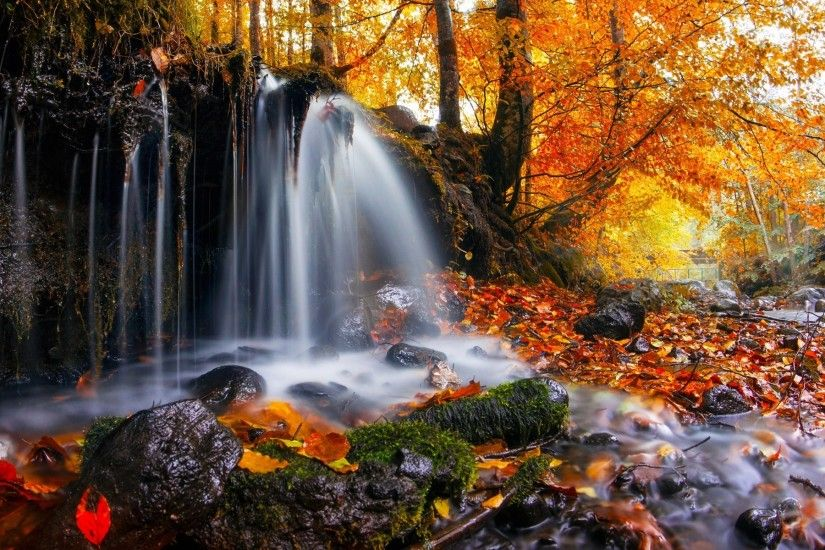 nature, Landscape, Waterfall, Trees, Leaves, Fall, Moss, Romania Wallpapers  HD / Desktop and Mobile Backgrounds