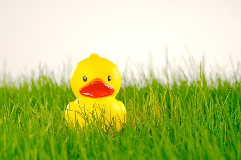 Rubber Duck Toy Wallpaper