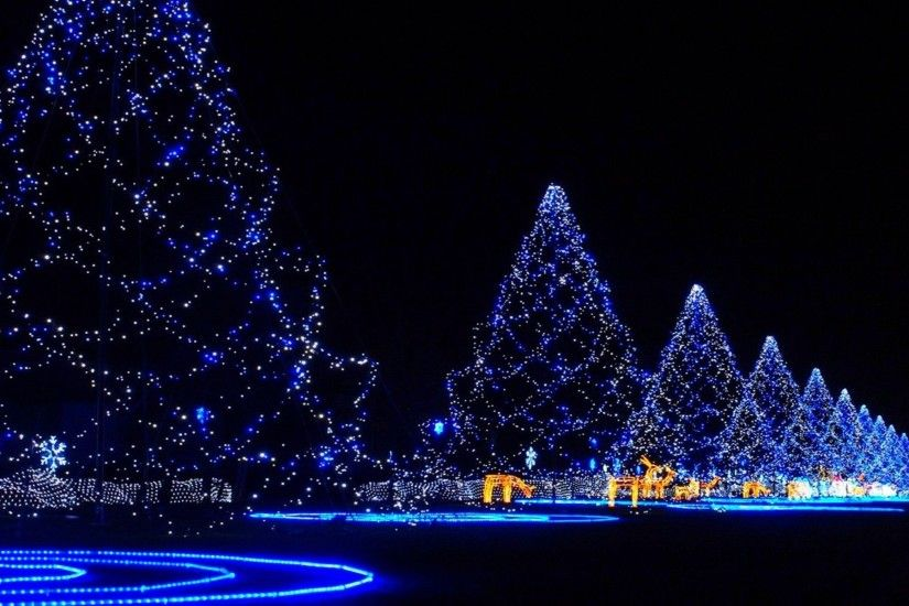 Christmas trees covered in lights merry Christmas holiday holidays HD  wallpaper.