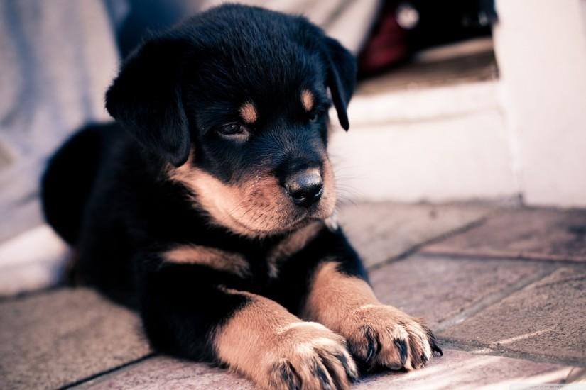 puppies wallpaper 2560x1600 download free
